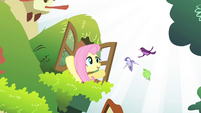 Fluttershy talking to the birds S4E14