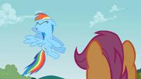 Rainbow Dash No S2E8
