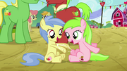 Fillies playing with each other S3E8.png