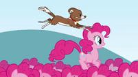 Winona jumping on Pinkie clone's head S3E03