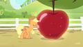 Applejack shining the apple S4E7.png