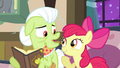 Apple Bloom holding back laugh S3E8.png
