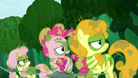 Fluttershy, Pinkie, and Golden Harvest moves their eyes to Zecora S5E26