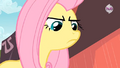 Fluttershy trying to be assertive S2E19.png