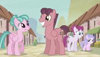 Village ponies mingling S5E1