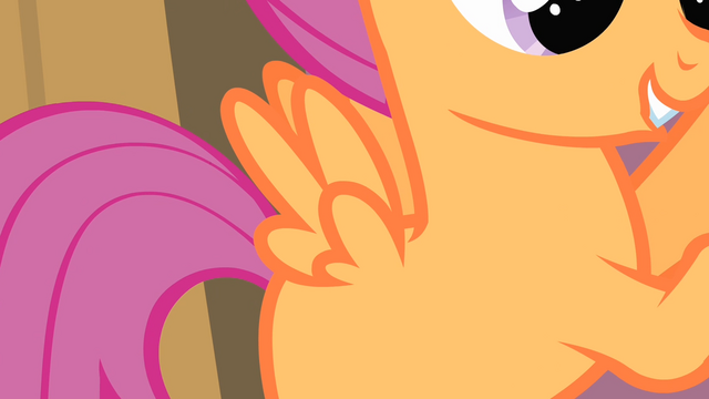 File:Scootaloo's wings S4E05.png