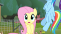 Fluttershy reveals she has stage fright S4E14.png