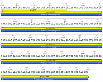 RNA sequence of protease coding segment of HIV-1