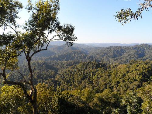 File:Laos Gibbon Experience.jpg