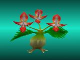 Plant MR2