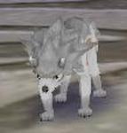 Tiger Gray MFL