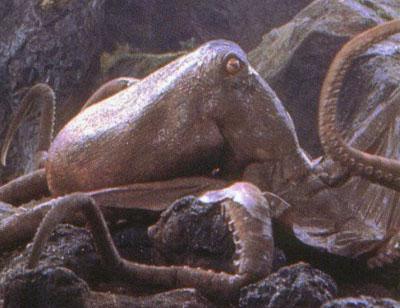 File:Giant Octopus.jpg