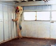 Scp173image
