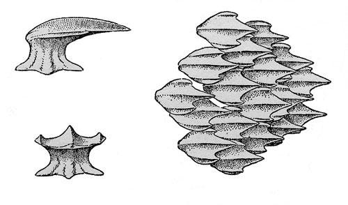 File:MH4U-Zamtrios Concept Art 003.jpg