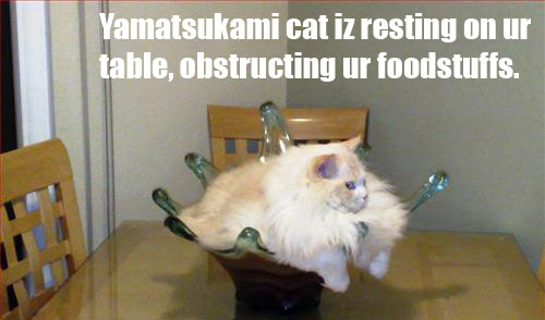 File:Yama cat.jpg