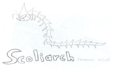 Scoliarch