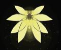 Seraphlight2.png