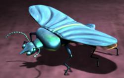 250px-Slug-beetle2