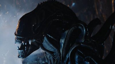 James-cameron-aliens-le-retour