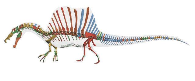 File:2014 Spinosaurus Skeleton.jpg