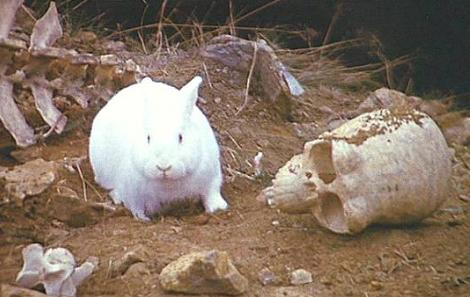 File:Killer rabbit.JPG
