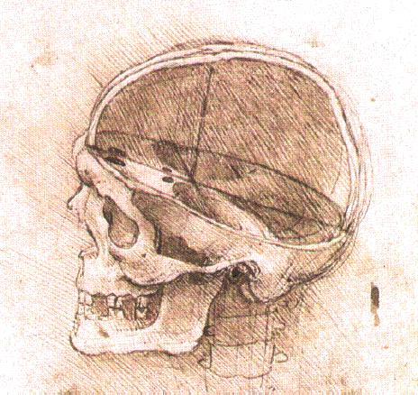 File:View-of-a-skull.jpg