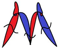 Morphopedian Logo