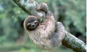 File:Sloth.png