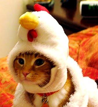 File:Chicken-cat.jpg