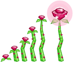 Radiant Roxy Rose growth
