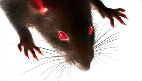 File:COV Rat 2.jpg