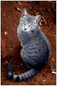 File:Catspeck.jpg