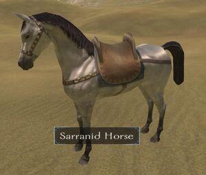 SarranidHorse