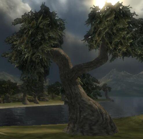 File:Spongewood Tree.jpg