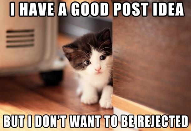 File:Apprehensive-kitten-110962.jpg