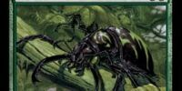 Pincher Beetles