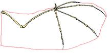 Lentaa wing diagram
