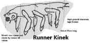 Runner Kinek by Holbenilord