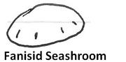 Fanisid seashroom