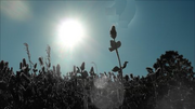 Cthonia landscape