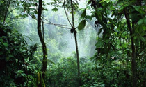 Tropica2