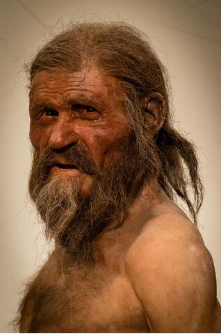 File:Otzi the iceman.jpg