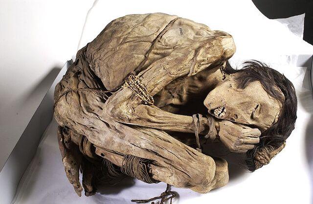 File:Peruvian mummified male, c.1200-1400 Wellcome L0035650.jpg