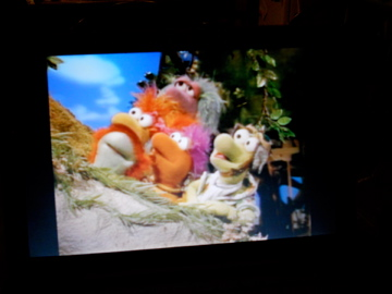 File:Fraggle 5 watching baby bird fly 2 copied.jpg