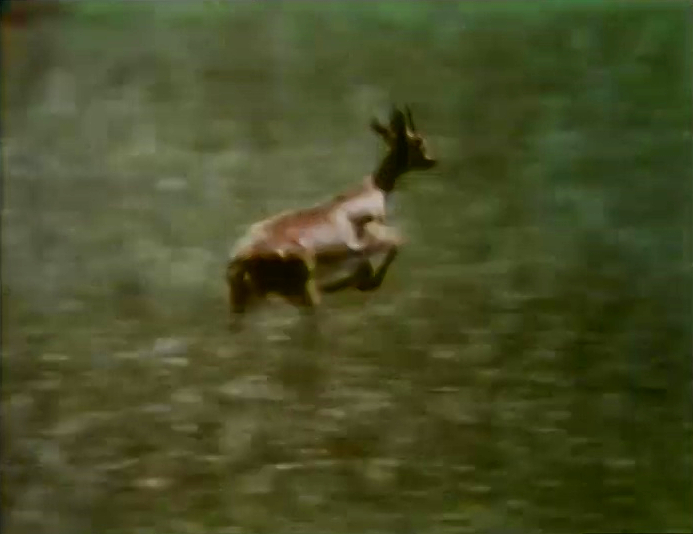 File:Film.Gazelle.jpg
