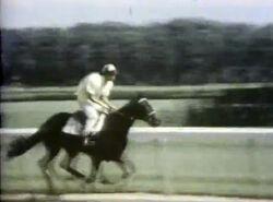 5-Horses
