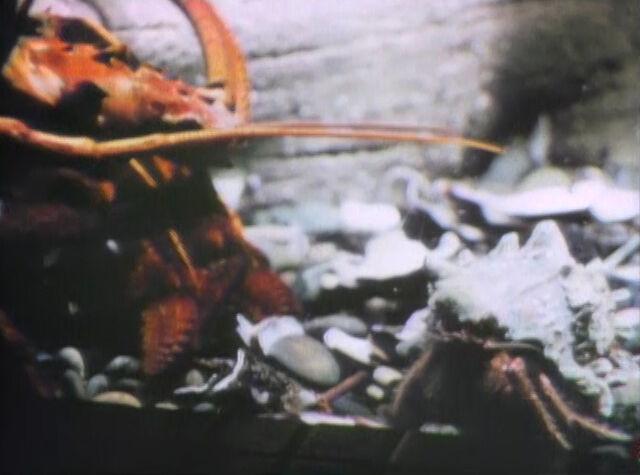 File:Lobstercrab.jpg