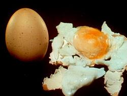 1454-Eggs