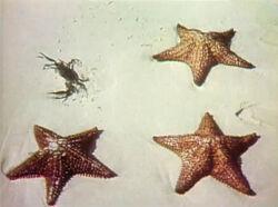 1041starfish