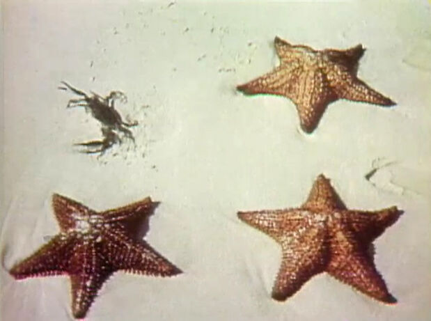 File:1041starfish.jpg